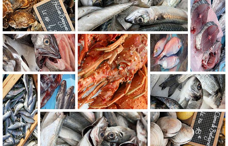 Conseil Spécialisé « pêche et aquaculture » de FranceAgriMer du 29 janvier 2019