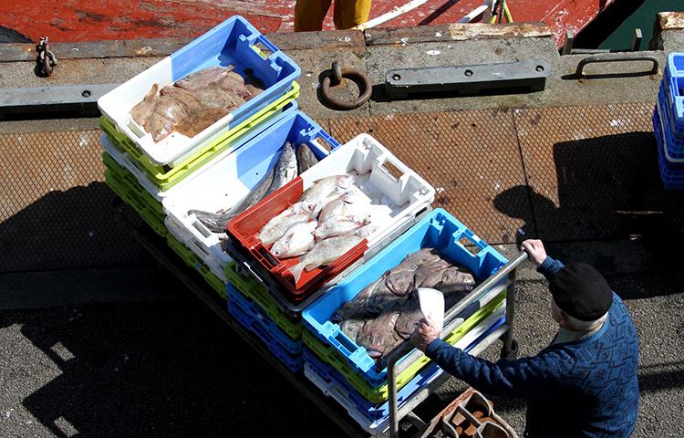 Le conseil des Ministres Européens a voté les quotas de pêche 2019