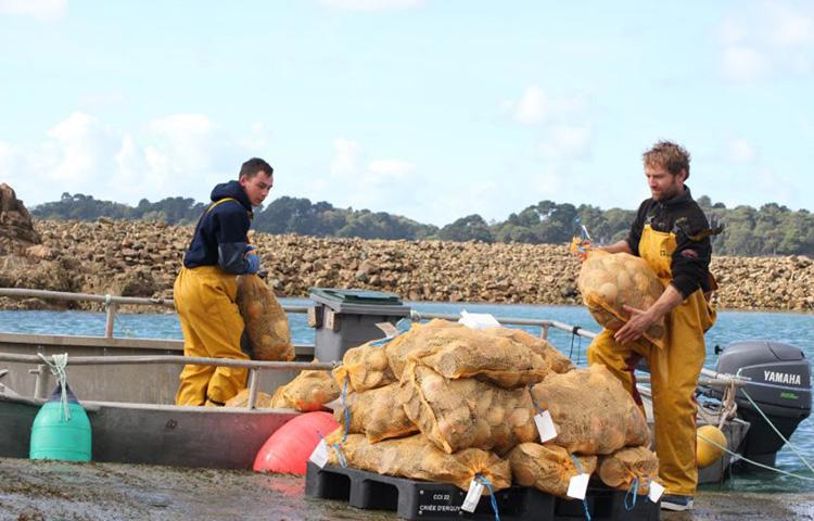 Étude sur la formation des prix des coquilles Saint-Jacques en halle à marée