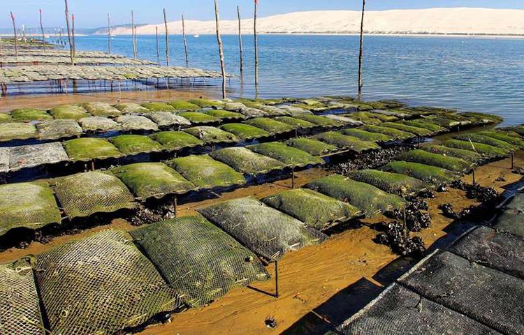 Interdiction temporaire de la pêche et de la commercialisation des huîtres du Banc d'Arguin