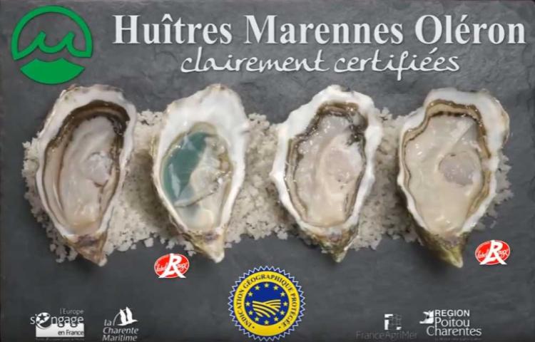 Huîtres : inquiétude pour l'IGP Marennes-Oléron après une décision de justice
