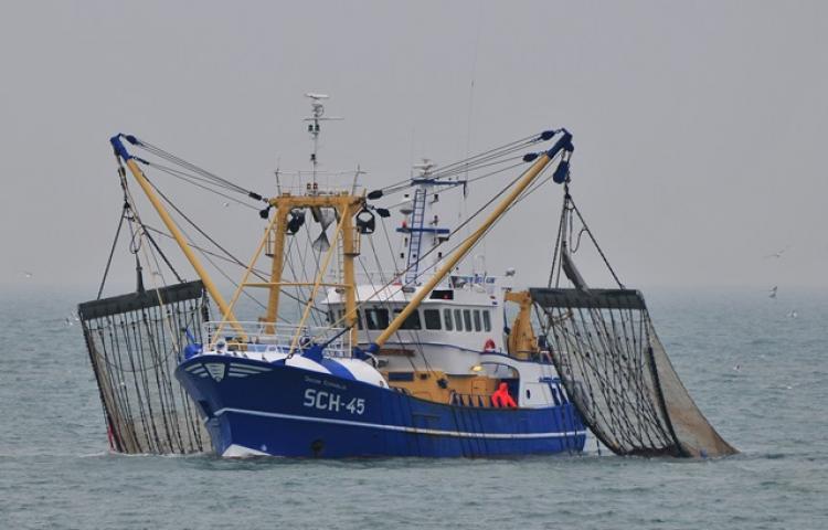 Interdiction de la pêche électrique effective dans les eaux sous souveraineté française depuis le 14 août 2019
