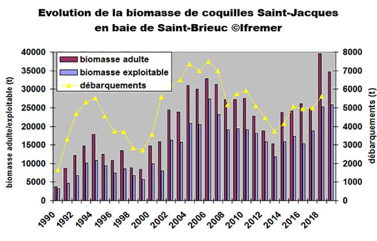 Coquille Saint-Jacques en baie de Seine et en baie de Saint-Brieuc : une bonne année, mais en-dessous du record de 2018