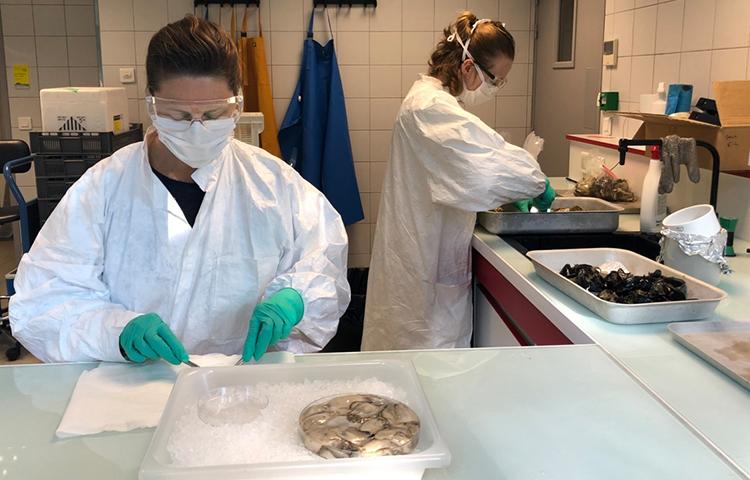 Aucune trace de COVID19 dans les premiers échantillons d'eau de mer et de coquillages analysés